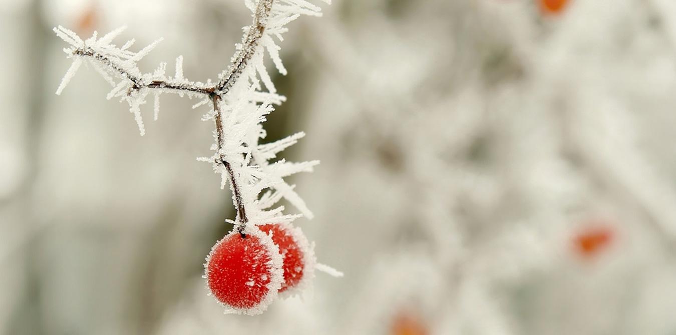 Girard_Gartenpflege_Winterdienst_1