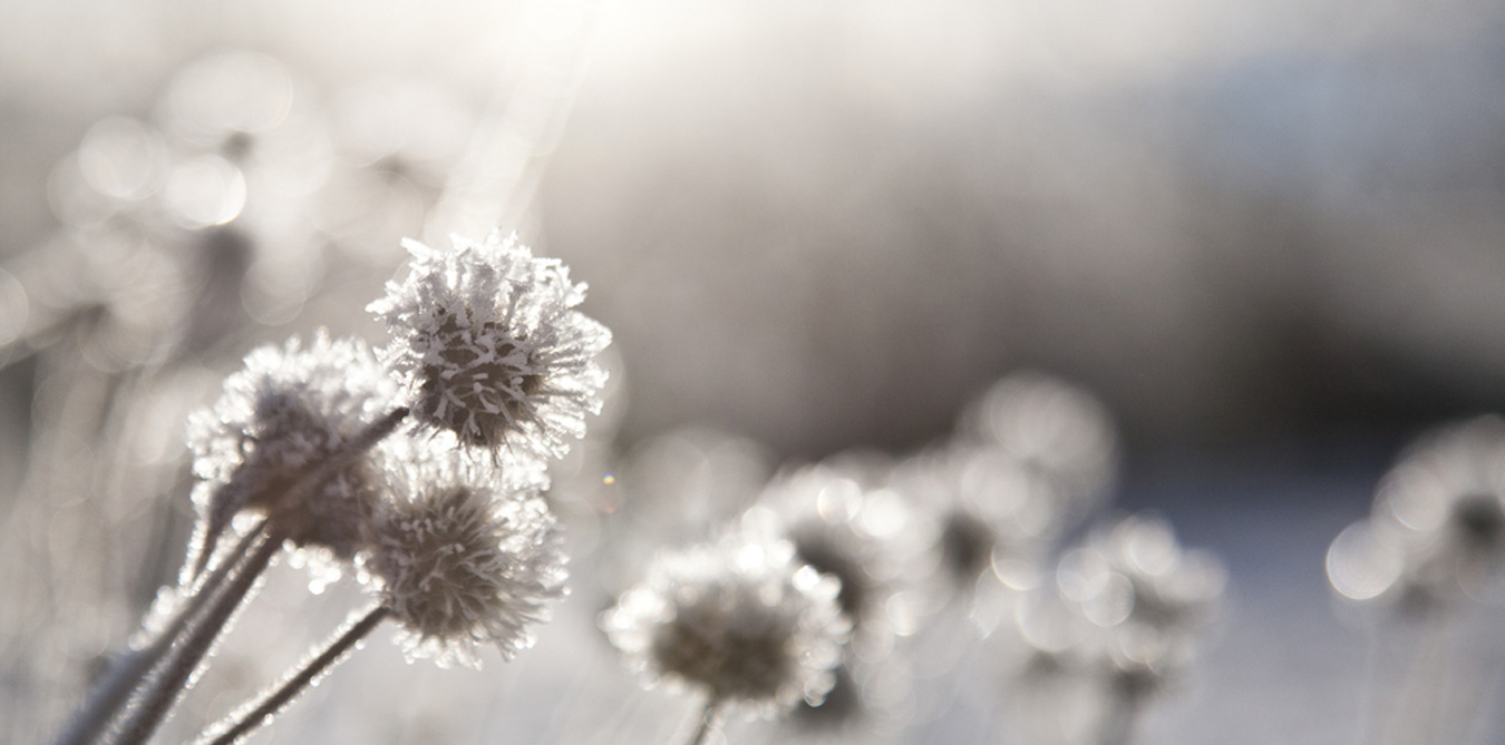 Girard_Gartenpflege_Winterdienst_2